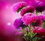 paars_bloem.jpg