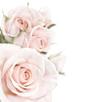 rozen_rose_2.jpg
