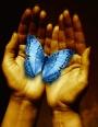 vlinder_hand.jpg