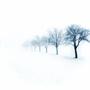 witte_bomen.jpg